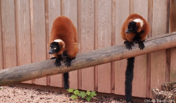 Lemur World - Artis